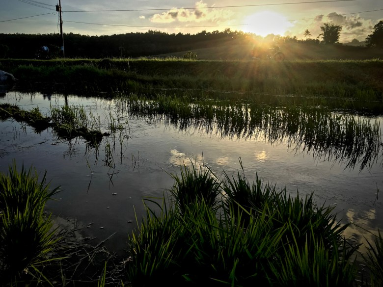 haiku poem about sunset over a rice paddy