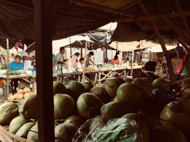 fresh green coconuts
