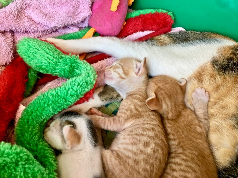 my little kitten babies