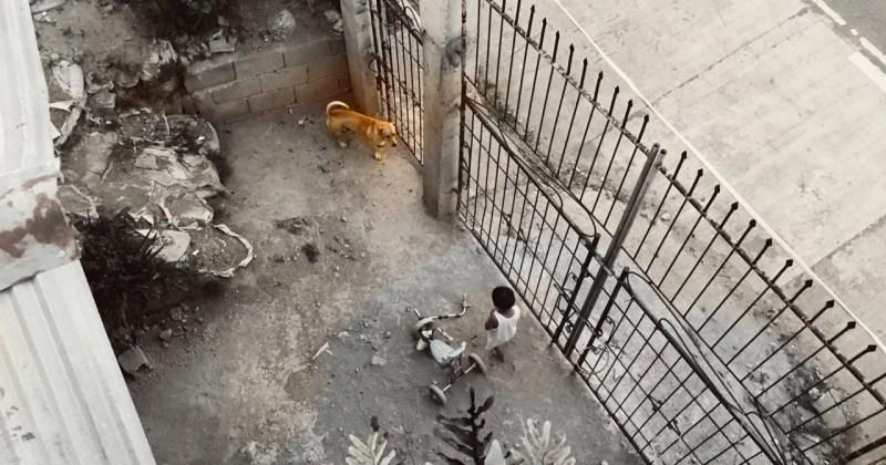the next door neighbour's dog