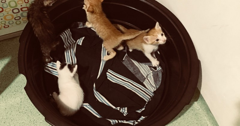kittens in a washtub
