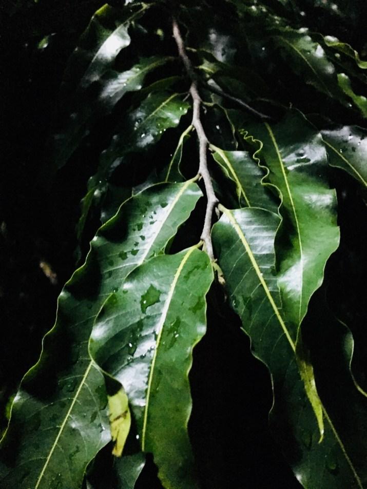 rain on leaves at night