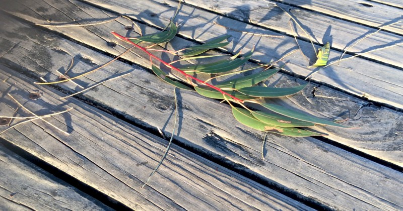 broken leaves on a boardwalk