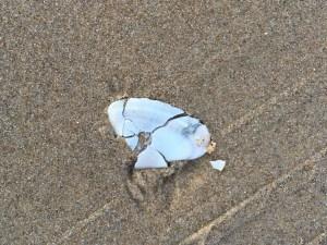 broken pipi shell