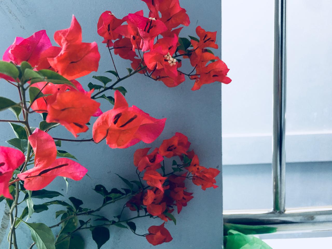 red flowers on the balcony