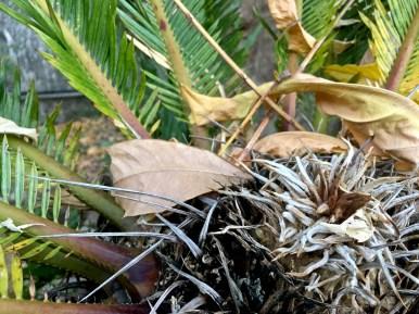 palm leaves4