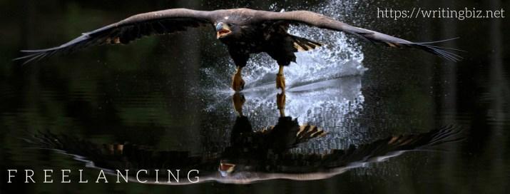 eagle over a lake