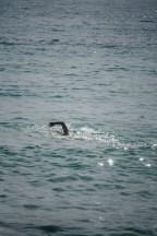 An open swimmer...