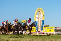 The Kalgoorlie Cup (2013). Classique Ivory, ridden by Shaun O'Donnell and trained by Gino Poletti, crosses the finish line to win the $150,000 XXXX-Gold Kalgoorlie Cup (2300m).