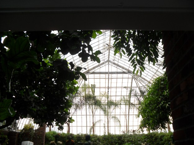 Phipps Conservatory, Pittsburgh, PA taken by me in August 2011