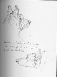 German Shepherd Dog sketches