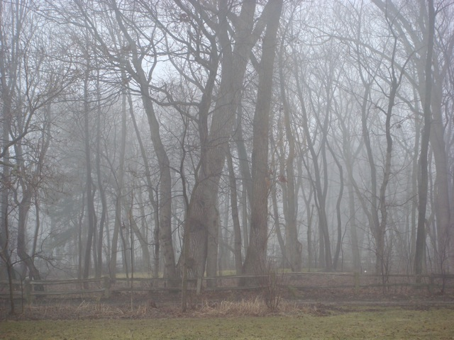 fogtrees