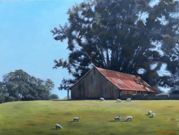 Old Barn Sheep Grazing