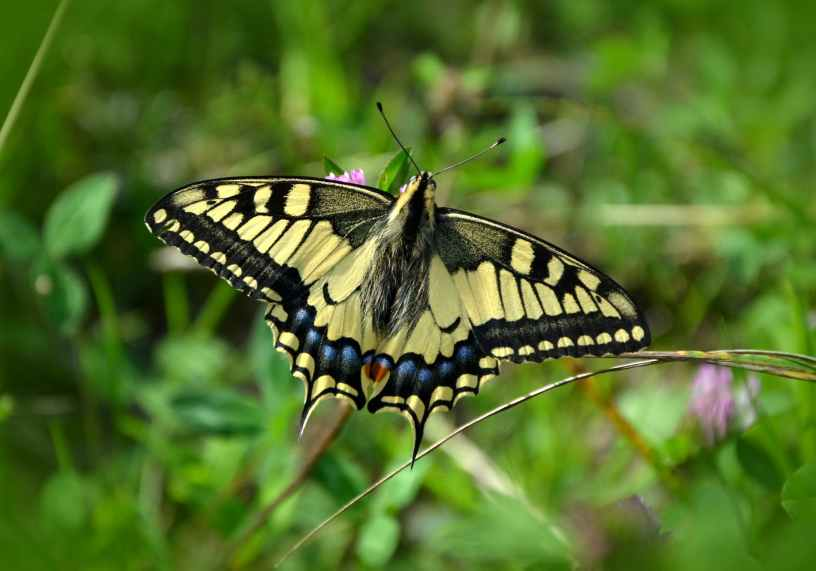 Christian poem Beauty Flutters By