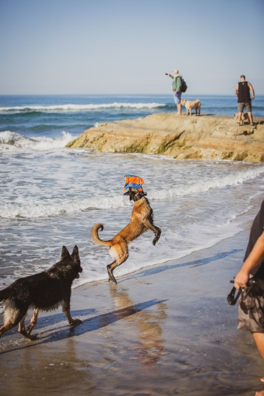 COMMERCIAL photos: Dirty Dogs Solana Beach