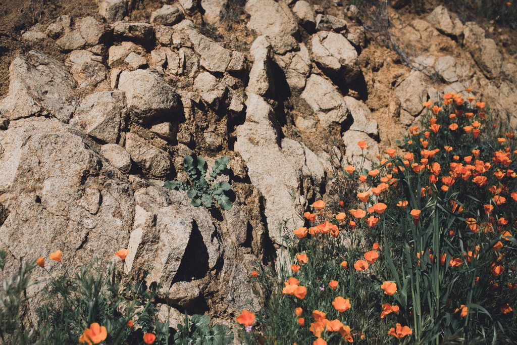 LIFESTYLE photos: California Super Bloom