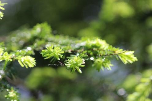 Pine needles, Hocking Hills, OH