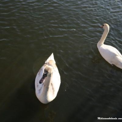 Natureza em Lelystad