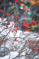 christmas-at-home-29