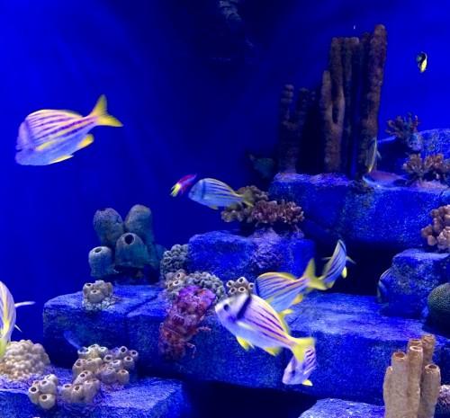 Aquarium tank at Audbon Aquarium