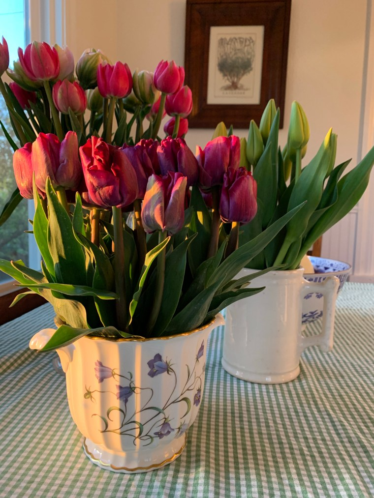 Tulips from Roozengarde in Mount Vernon, April 2021