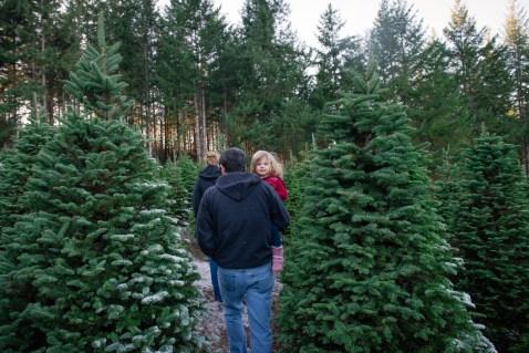 Macks Christmas Tree Hunt-4