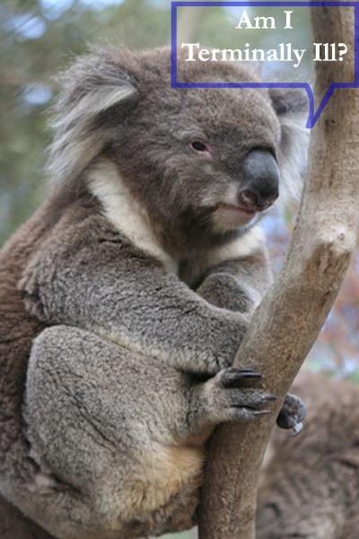 blog australia with caption sxc 1398862_25566265