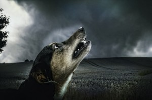 Dog by Lizzyliz. This dog knows darkness.