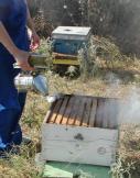 Εικόνα 7. Ο καπνός βοηθά στις επιθεωρήσεις των μελισσών.