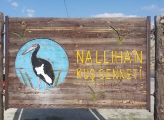 Nallihan Bird Sanctuary | Nallihan, Ankara | Camping & Trekking