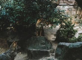 Kampta Vahşi Hayvanlarla Karşılaşma Durumunda Ne Yapmalıyız?