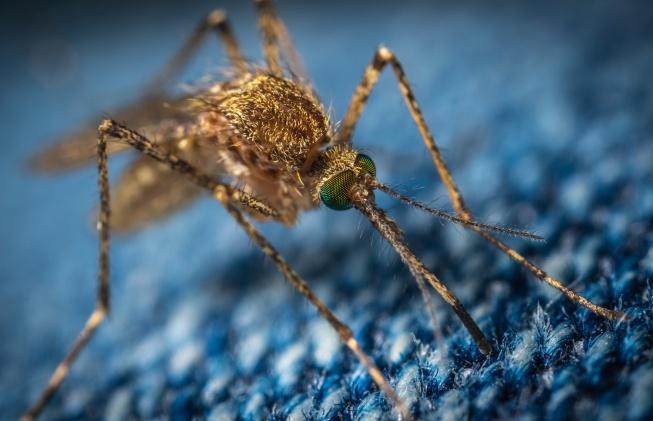 Kamplarda sivrisineklerden korunmak