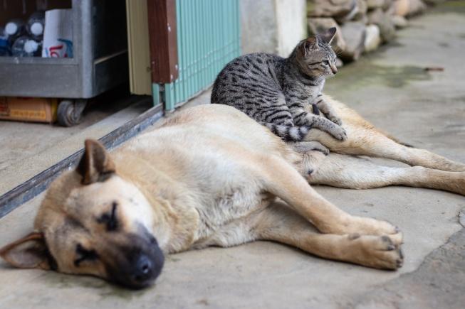 Sokak hayvanları için uygun mama