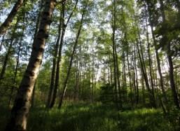 Kyrksjön, Bromma, träd