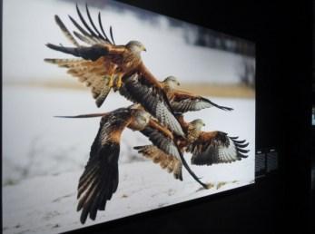 naturhistoriska-riksmuseet-utstallningen-vinnare-och-forlorare-i-svensk-natur-rod-glada