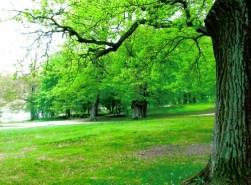 Hagaparken, träd