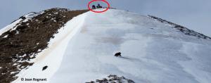 Rencontre homme et ours dans les Pyrénées