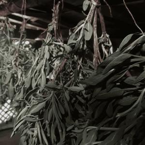Séchage naturel des plantes à la Ferme magique