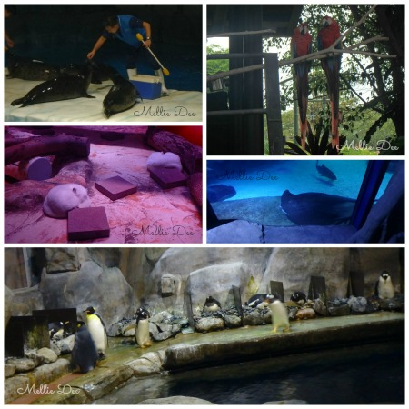Ocean Park Animals | Hong Kong