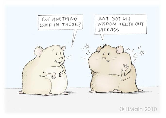 Wisdom Teeth Hamster Comic | Holly Main Illustrations 2010
