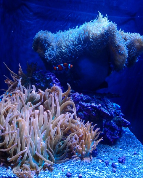 Seattle Aquarium | Seattle, Washington | Nemo