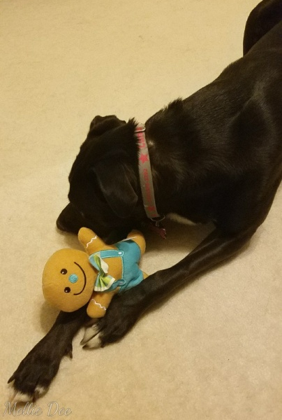 Luna and Gingerbread Man Toy