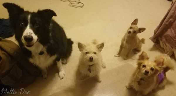Rocky, Bruno, Rizzo, Kato Waiting Patiently