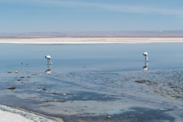 Laguna Chaxa
