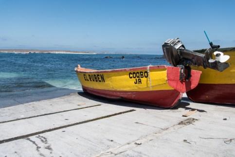 Chili, Réserve nationale des manchots de Humbolt