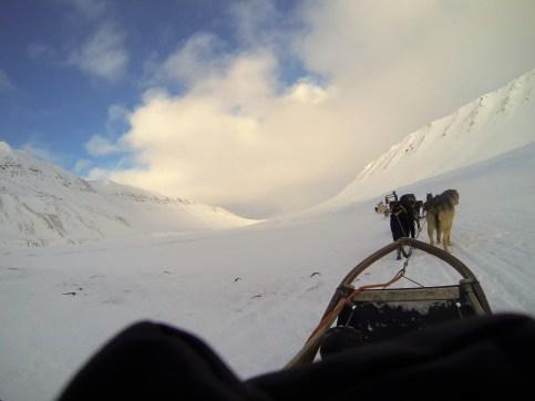Chiens de traîneau au Svalbard