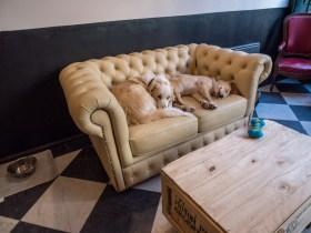 Le Waf, Café-chiens à Lille