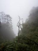 En route vers le sommet de Emeishan