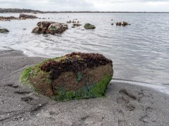 Søltuvík