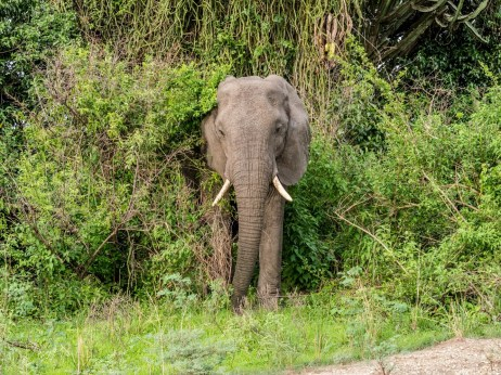 Queen Elizabeth National Park-105